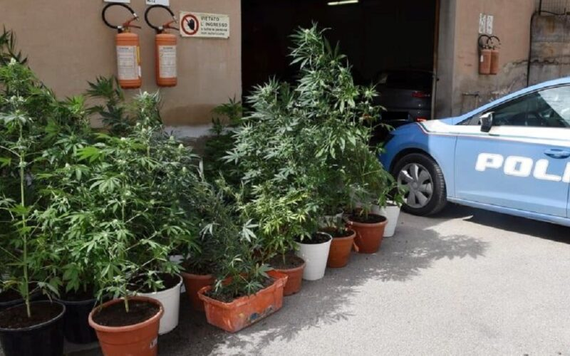 Niscemi: serra fatta in casa con 29 piante di marijuana, uomo di 36 anni agli arresti domiciliari. Il blitz in un garage