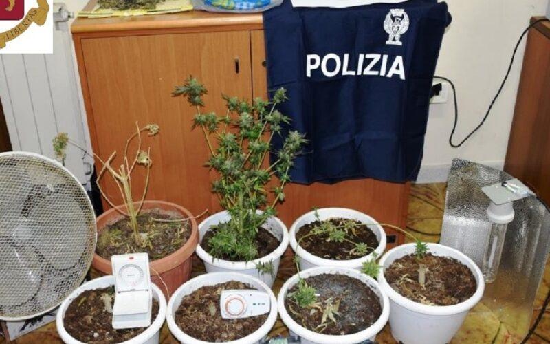 Niscemi: erba nel ripostiglio, piantine sul terrazzo, due fratelli in manette con l'accusa di coltivazione e spaccio