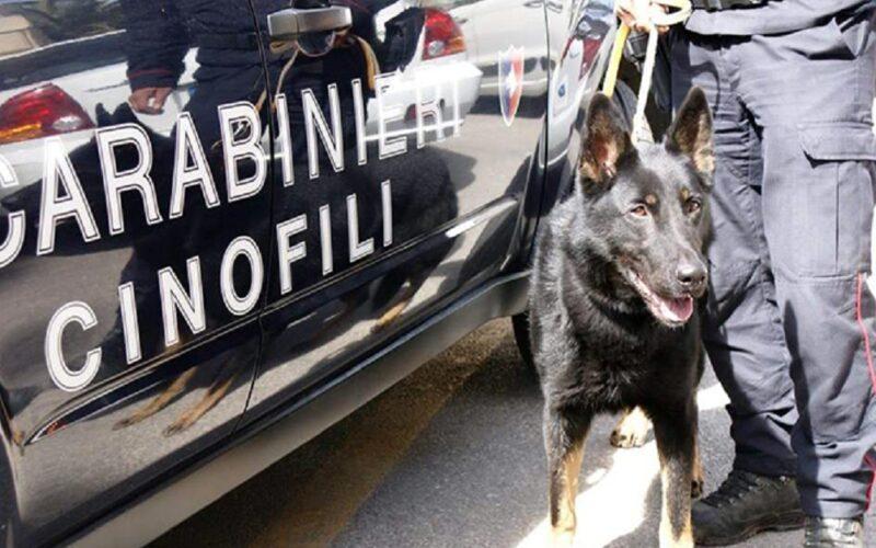 Riesi: spacciatore a 19 anni, scovato dai carabinieri con l'ausilio di un cane antidroga. Ora ha l'obbligo di firma