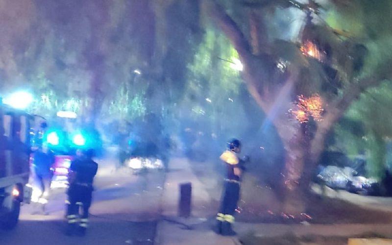 Gela: teppisti di nuovo in azione, bruciato un altro albero. Tra i residenti serpeggia lo scoramento, è il quarto incendio